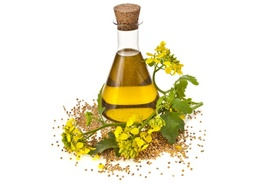 Refined Canola / Colza Oil